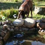 Ловим уток у себя в пруду